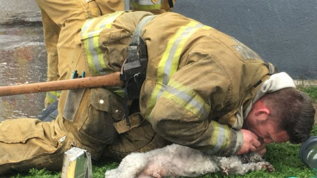 Dog, firefighter, California, Andrew Klei, lifeless dog,  life, breathed life, Humanity, World News, India News