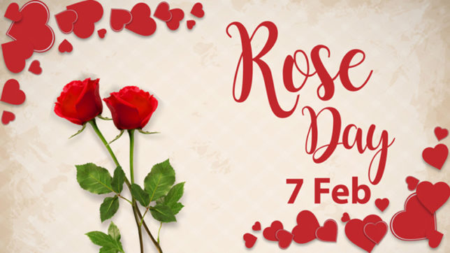 Image result for Rose Day wishes and greetings