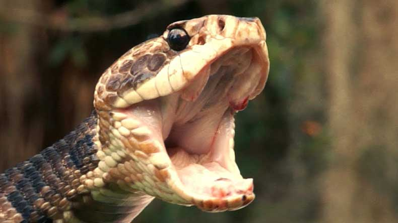 Woman's-Body-Found-in-Belly-of-python